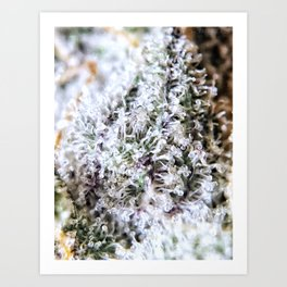 Kush Art Prints | Society6