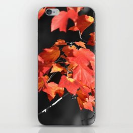 Cold Fall iPhone Skin