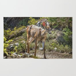 Crossing Paths with a Black-Tailed Deer Rug