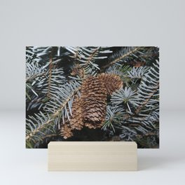 Spruce Cones And Branches Mini Art Print