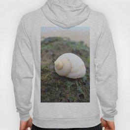 Seashell on the shore Hoody