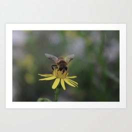 False Bee. Art Print