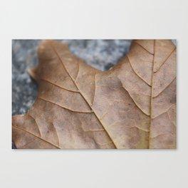 Leaf 1 Canvas Print