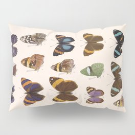 Vintage Hand Drawn Scientific Illustration Insects Butterfly Anatomy Colorful Wings Pillow Sham