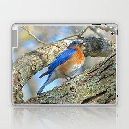 Bluebird in Tree Laptop & iPad Skin