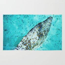 Ichthys Rug