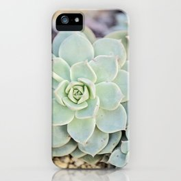 Echeveria Derenbergii iPhone Case