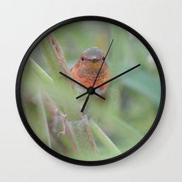 An Allen's Hummingbird Amid Mexican Sage Wall Clock