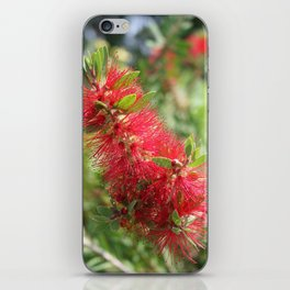 Calliandra Haematocephala Red Powderpuff  iPhone Skin