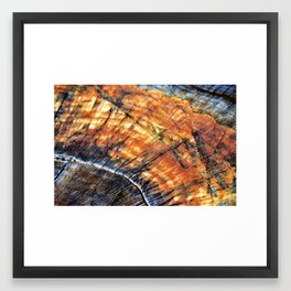 Macro Tree Stump Ring Arc Framed Art Print