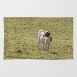 Goat - baby Rug