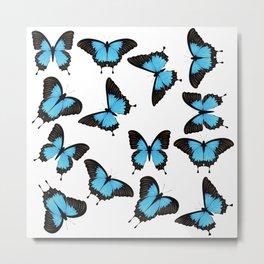 Blue mountain swallowtail Metal Print