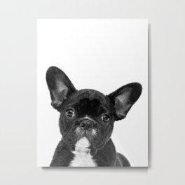 Black and White French Bulldog Metal Print