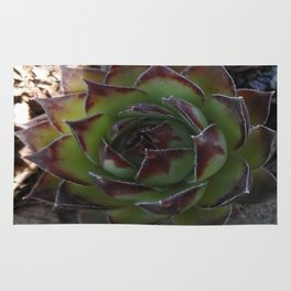 Red and green succulent. Rug