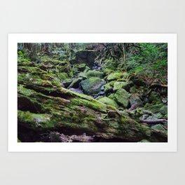 Yakushima Greenery Art Print