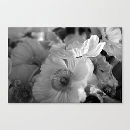black+white poppies Canvas Print