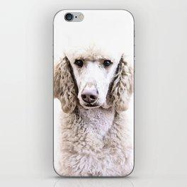 Standard Poodle iPhone Skin