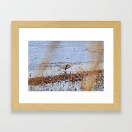 Lake Mattamuskeet Framed Art Print