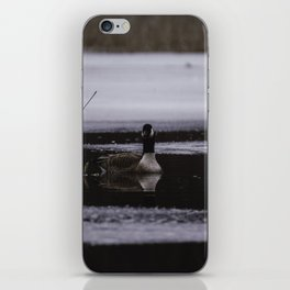Canadian Geese on frozen lake iPhone Skin