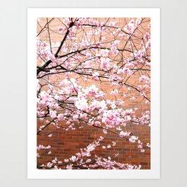 Cherry Blossoming Art Print