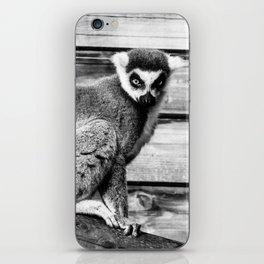 Ring Tailed Lemur - by Cheryl Gerhard iPhone Skin