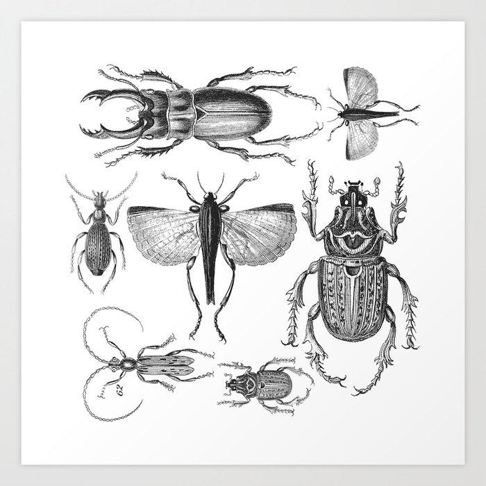 vintage beetle black and white drawing art print by lebensart society6