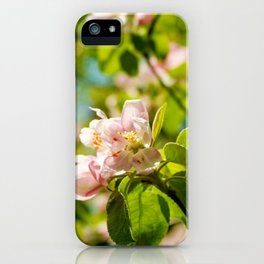 Apple Blossoms (1) iPhone Case