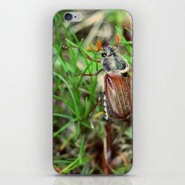 May bug iPhone Skin