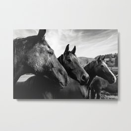 Horse heads Metal Print