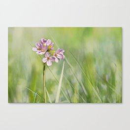 Delicate beauty Canvas Print