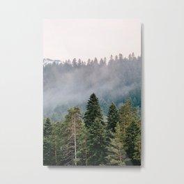 pines in haze Metal Print