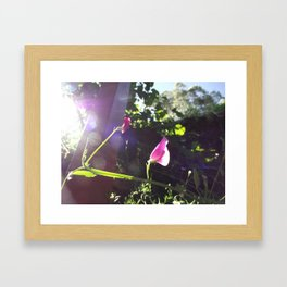 Plain Flower Framed Art Print