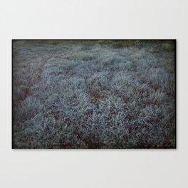 Grass & Sea II Canvas Print