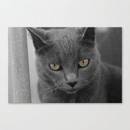 Grey Cat. Canvas Print