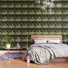 Rocky Mountain Wapiti Wallpaper