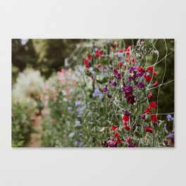 Sweet Pea Garden Canvas Print