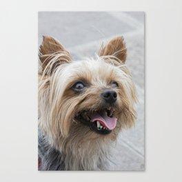 shitzu dog Canvas Print