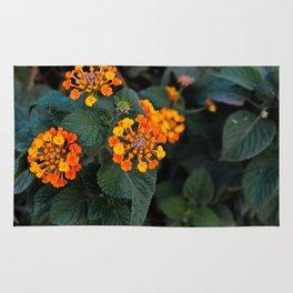 primrose flowers Rug