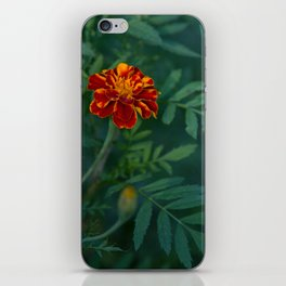Flowers Tagetes iPhone Skin