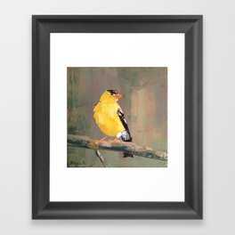 Yellow Finch Framed Art Print