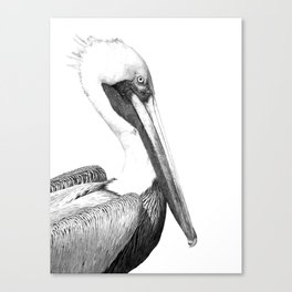 Black and White Pelican Canvas Print
