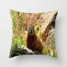 Marmot On A Rock Throw Pillow