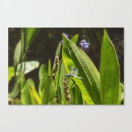 Great Blue Skimmer, No. 2 Canvas Print