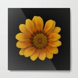 Yellow margarite Metal Print