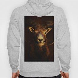 Beautiful Mouflon on Dark Background #decor #society6 #buyart Hoody