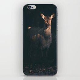 Red deer standing in sunlight. iPhone Skin