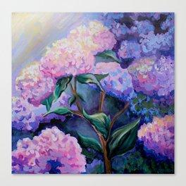 Cape Hydrangeas Canvas Print