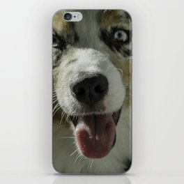 Australian Shepherd iPhone Skin