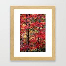 Red Maples Framed Art Print