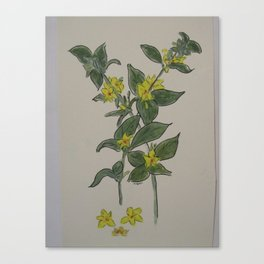 Yellow in Spring Canvas Print